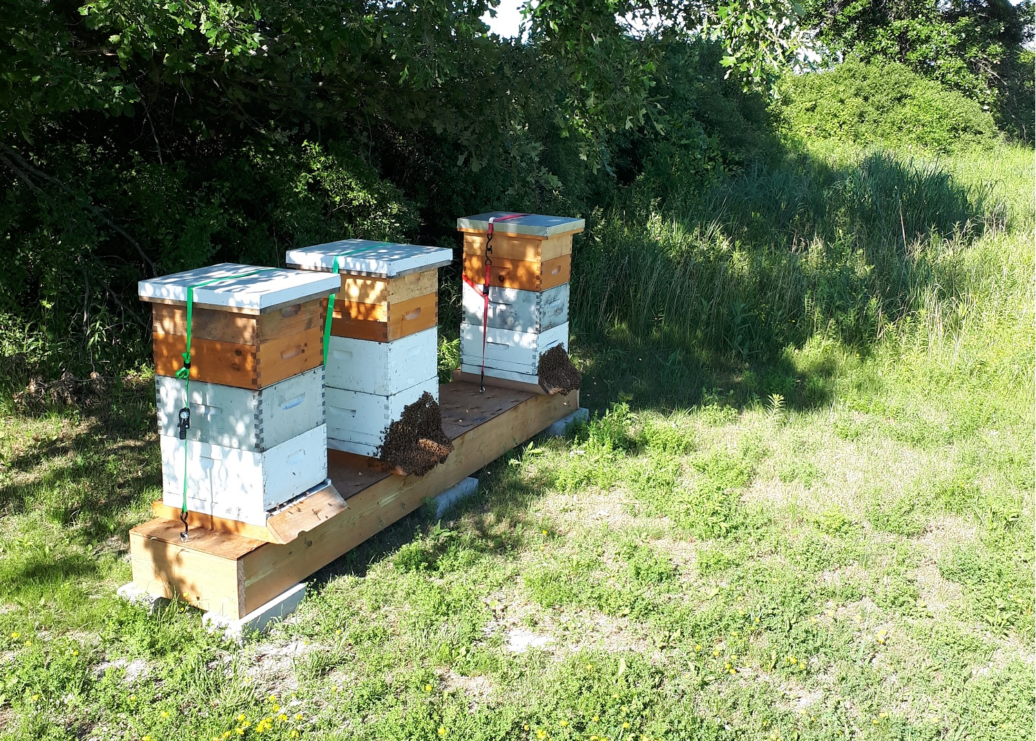 beehives in the shade of a tree