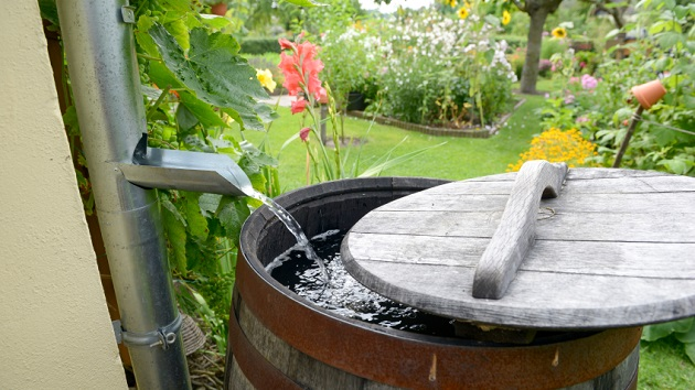 Rain barrel for blog
